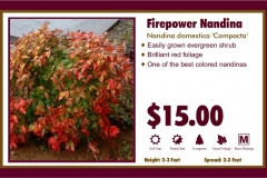 1_cards_015555 - Firepower Nandina