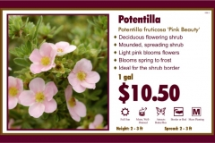1_cards_015950 - Potentilla