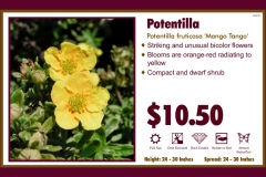 1_cards_020021 - Potentilla