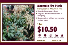 1_cards_020324 - Mountain Fire Pieris