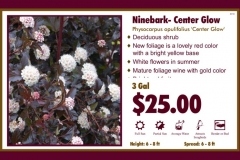 1_cards_021012 - Ninebark- Center Glow