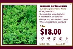 1_cards_021046 - Japanese Garden Juniper
