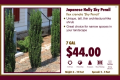 1_cards_021503 - Japanese Holly Sky Pencil