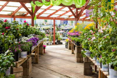 Three Reasons You Should Shop For Plants at Your Local Nursery
