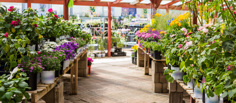 3 Great Reasons to Get Your Plants from a Nursery