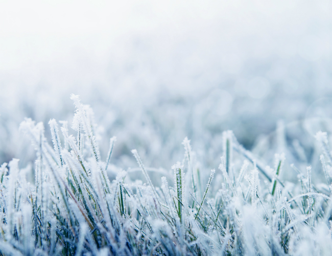 What Yard Maintenance Should You Do During the Winter?
