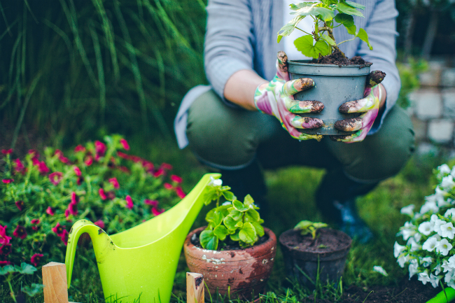 5 Tips for Planting Flowers in the Spring