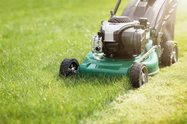 Choose the Lawn Mower That's Best for You