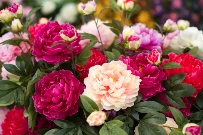 The Best Flowers to Buy for Each Season