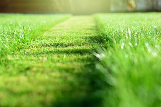 Get Your Weekends Back by Hiring a Lawn Care Service