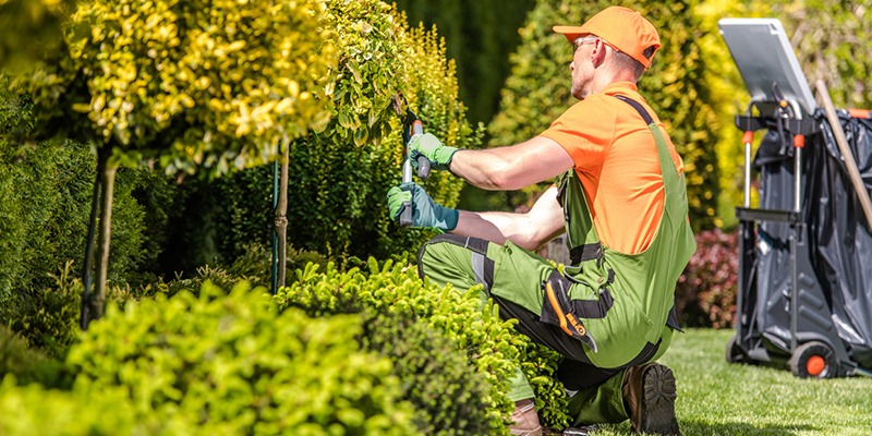 What You Need to Know About Hiring a Landscaper