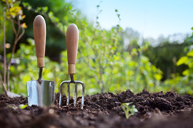 5 Essential Garden Supply Items for a Beginning Gardener